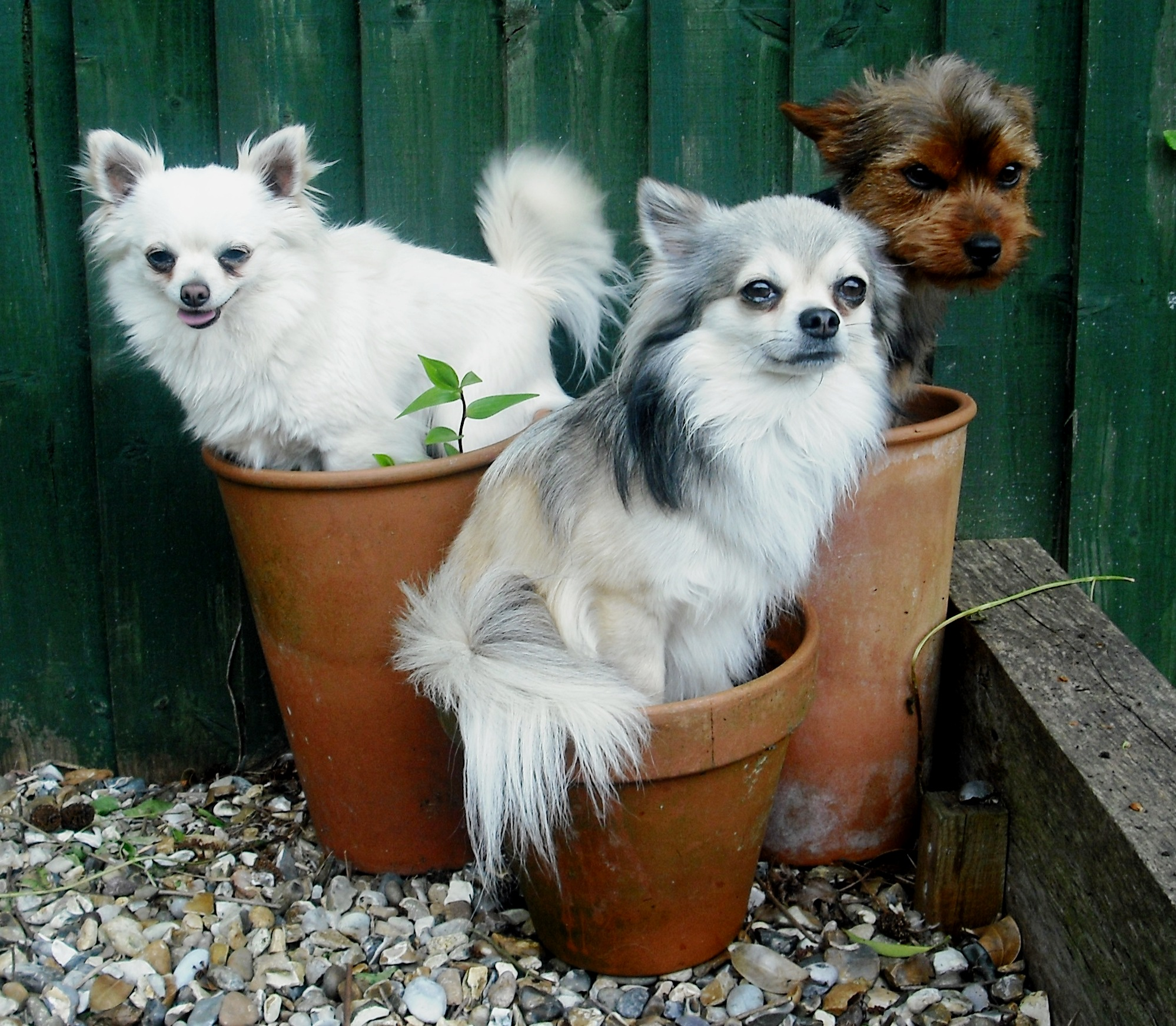 flower pot dogs